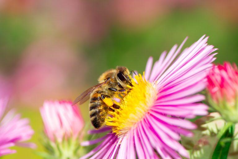 Czy pszczoła może popaść w nałóg?